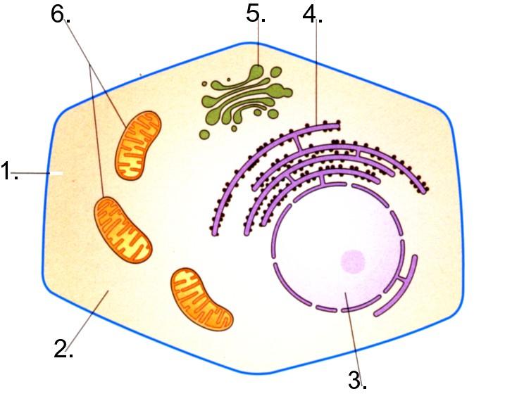 Vergleich pflanzen und tierzellen